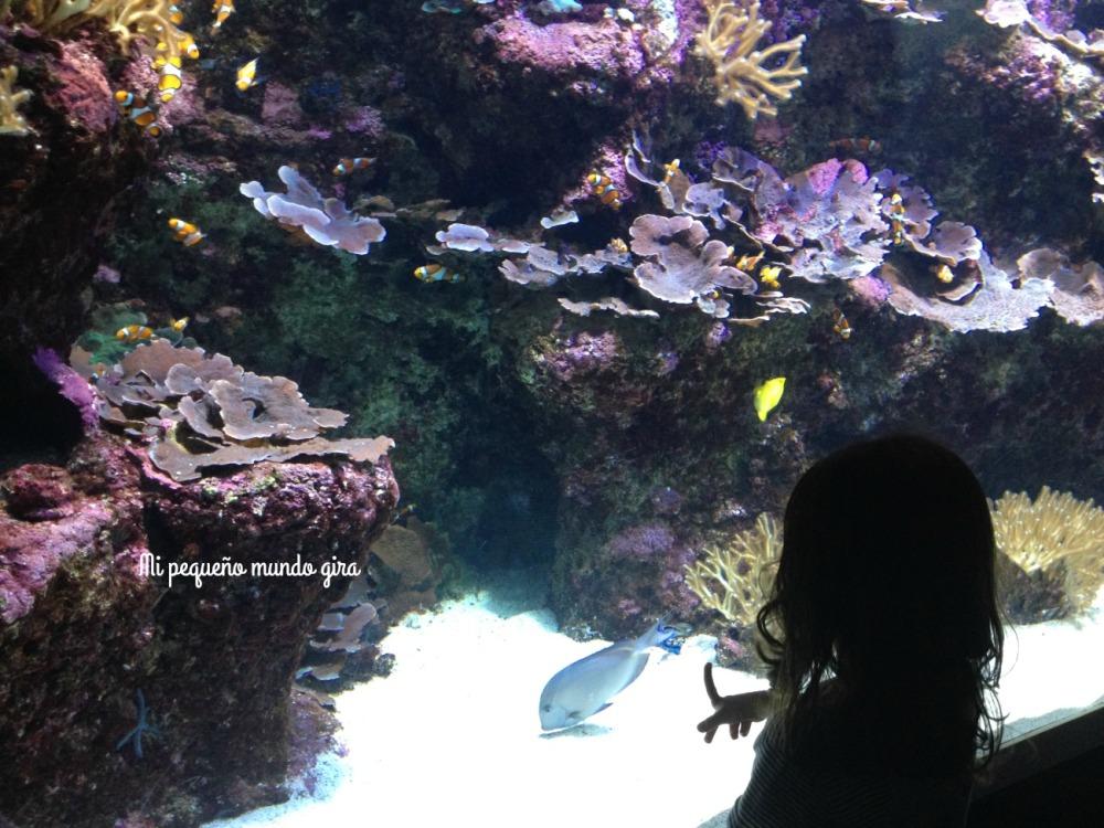Donosti acuarium