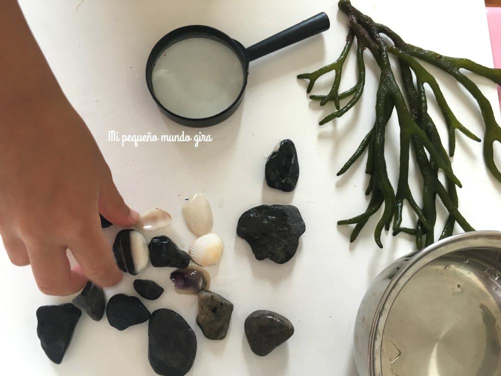 recoger tesoros de la playa como piedras,conchas y algas