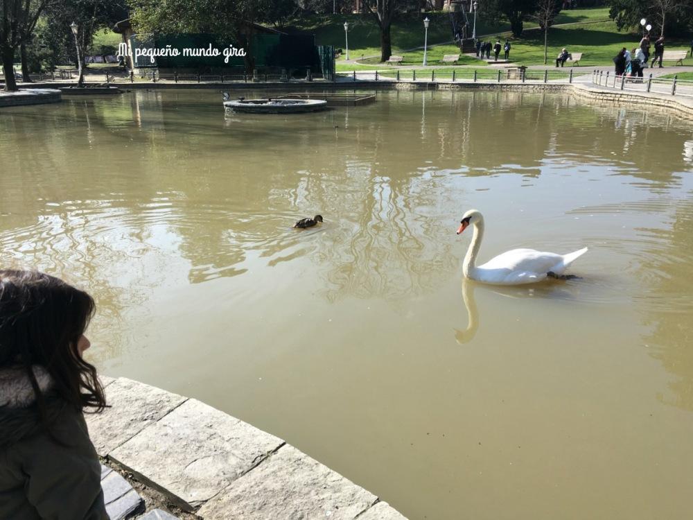 cisnes y patos en Bilbao