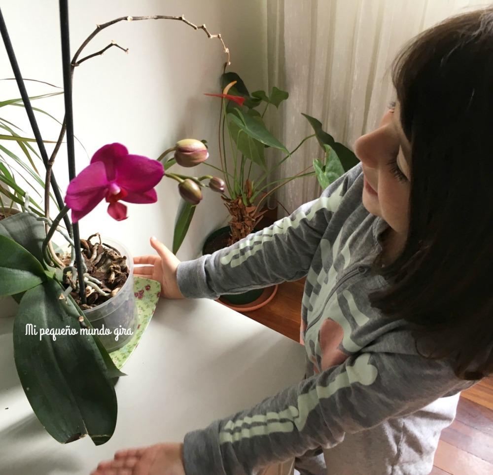 llega la primavera y la orquidea florece