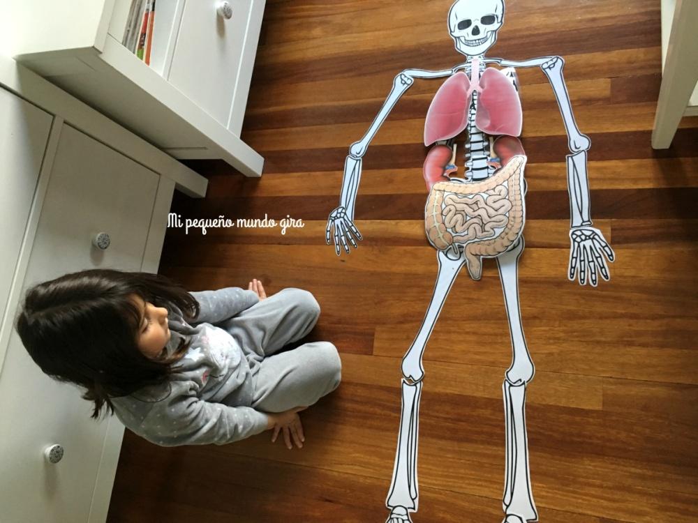 montando el esqueleto y los organos