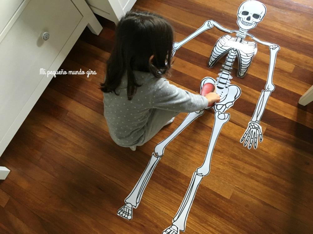cuerpo humano y sus organos