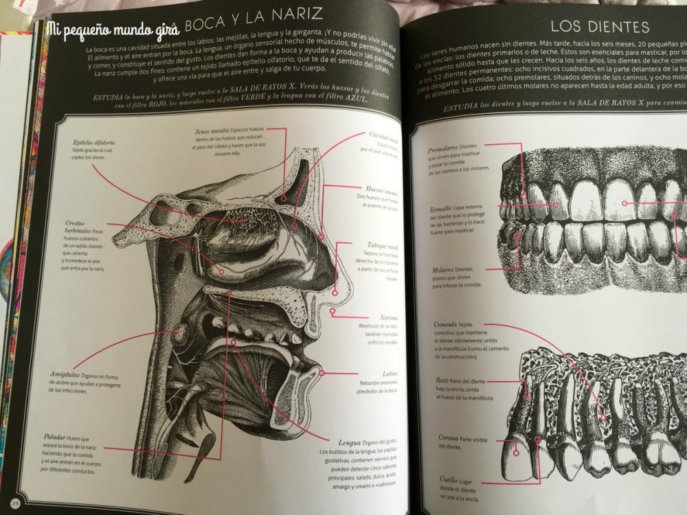 los-dientes-ilumianatomia