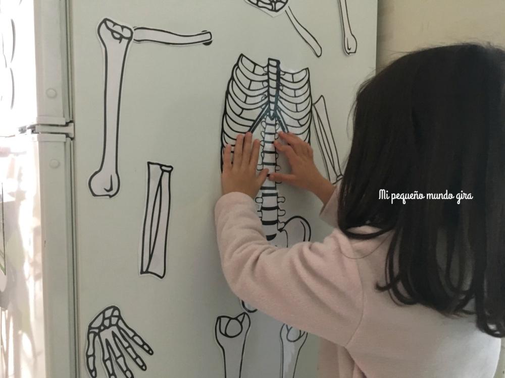 montar-el-esqueleto-con-los-imanes