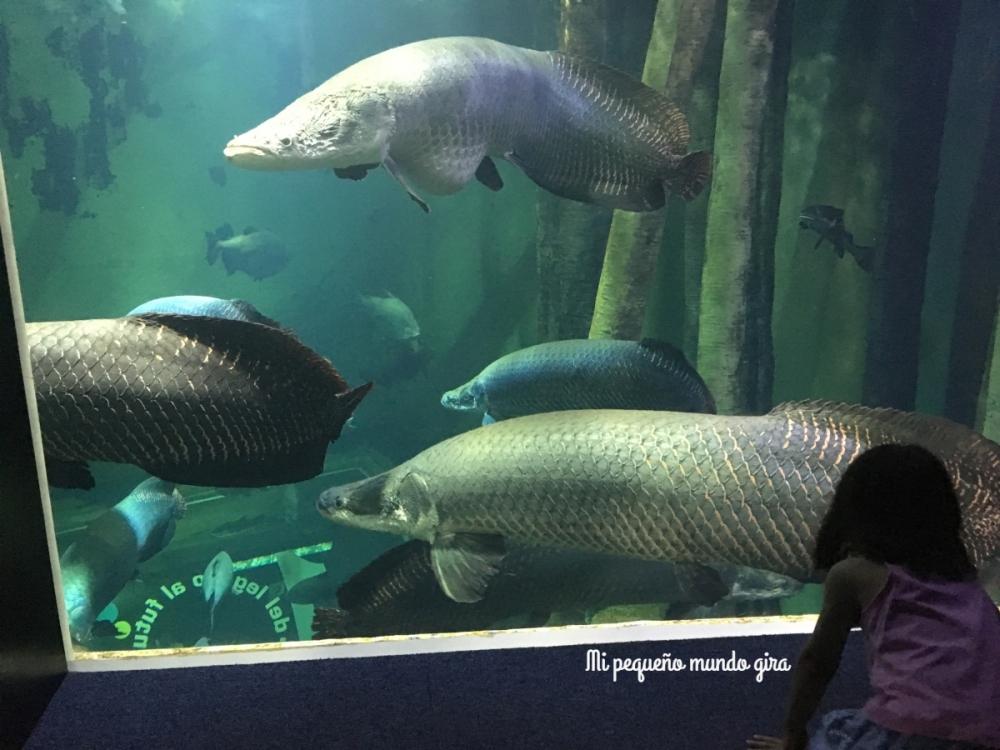 acuario fluvial de Zaragoza