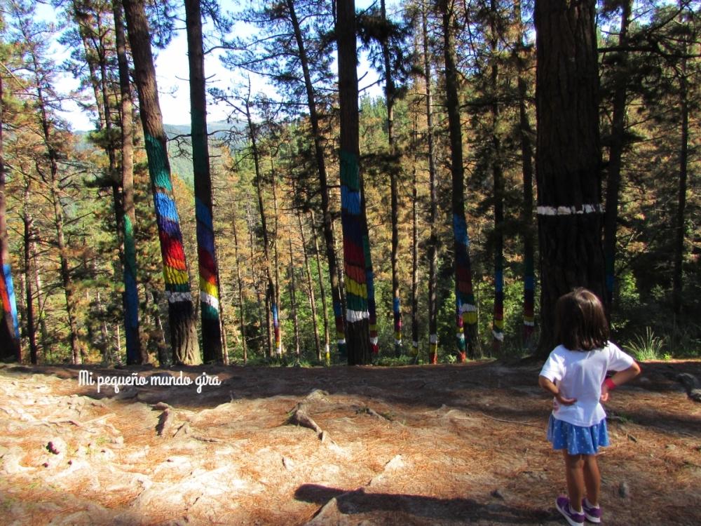 mirando-los-arboles-pintados-del-bosque-de-oma